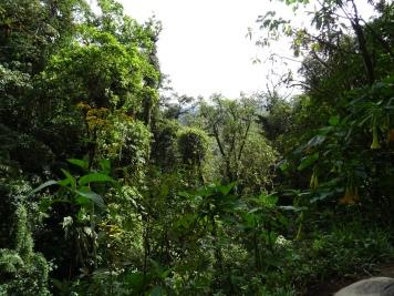 Wasserfälle und Umgebung von Boquete